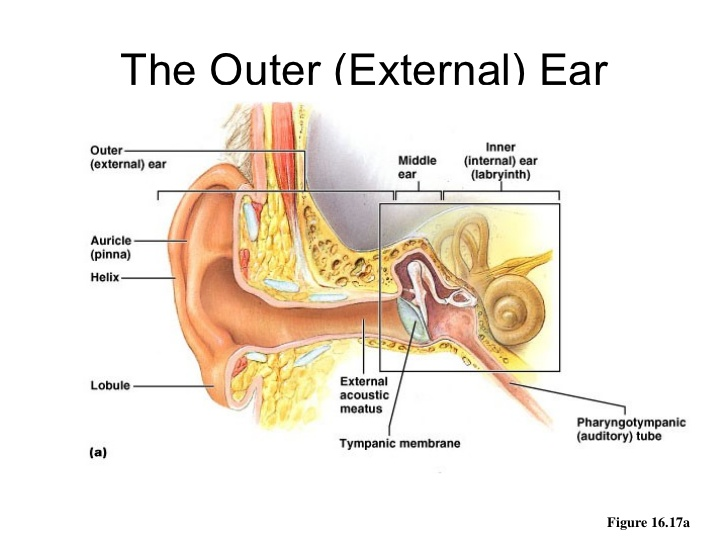 Denoc hearingouter ear diseases related to it blog ccuart Images