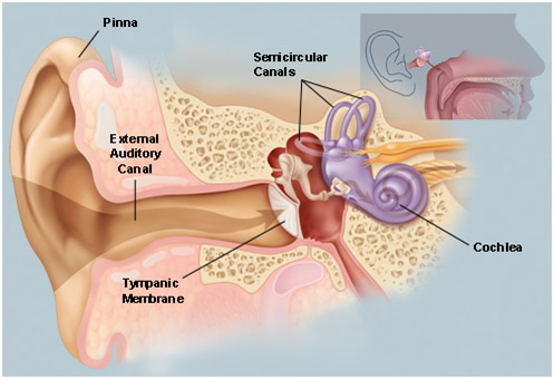 Denoc Hearing Ear And Its Functions