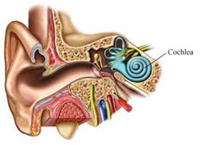 Denoc Hearing Ear And Its Functions  Denoc Hearing Ear And Its Functions  Denoc Hearing Ear And Its Functions  Denoc Hearing Ear And Its Functions  Denoc Hearing Ear And Its Functions